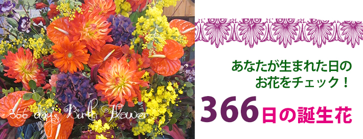 9月17日の誕生花|二子玉川の花屋 ネイティブフラワーイーダ