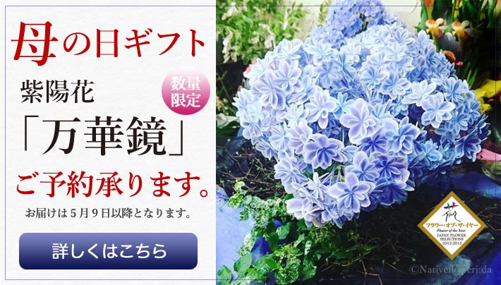 母の日に贈る花 紫陽花万華鏡 ご予約承ります