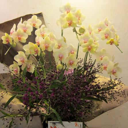 新装開店 お祝い花 アレンジメント 胡蝶蘭とアザミのアレンジ
