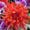 母の日 花 二子玉川の花屋 ネイティブフラワーイーダ