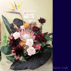 移転祝いのアレンジメント お祝い花 二子玉川の花屋 ネイティブフラワーイーダ 【生花アレンジ】ブラックインパクト