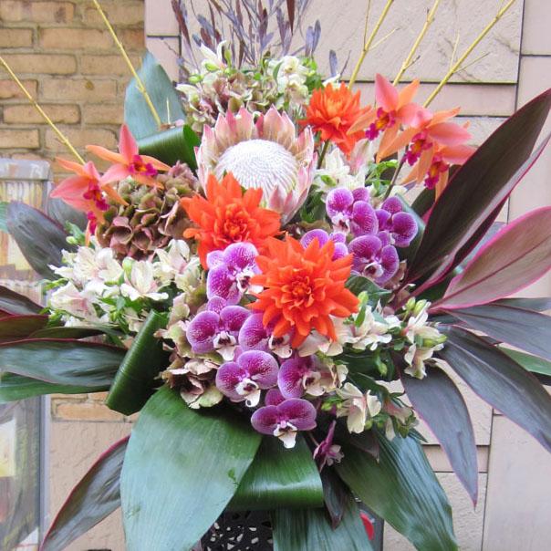 新装開店 お祝い花 スタンド花 東京 胡蝶蘭と赤ダリア
