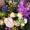 公演祝い 花 ネイティブフラワーイーダ