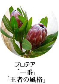 開店祝い スタンド花 プロテア 花言葉は王者の風格、一番、自由自在